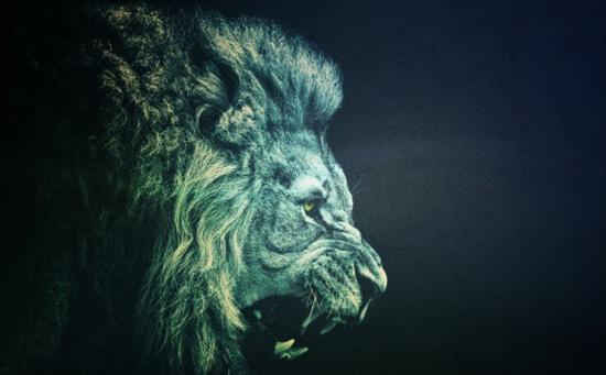 Colorful Lion Wallpaper Agressive lion wallpaper 550x341