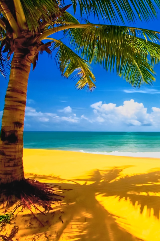 Beach Palm Tree Wallpapers iPhone Wallpaper Gallery 640x960