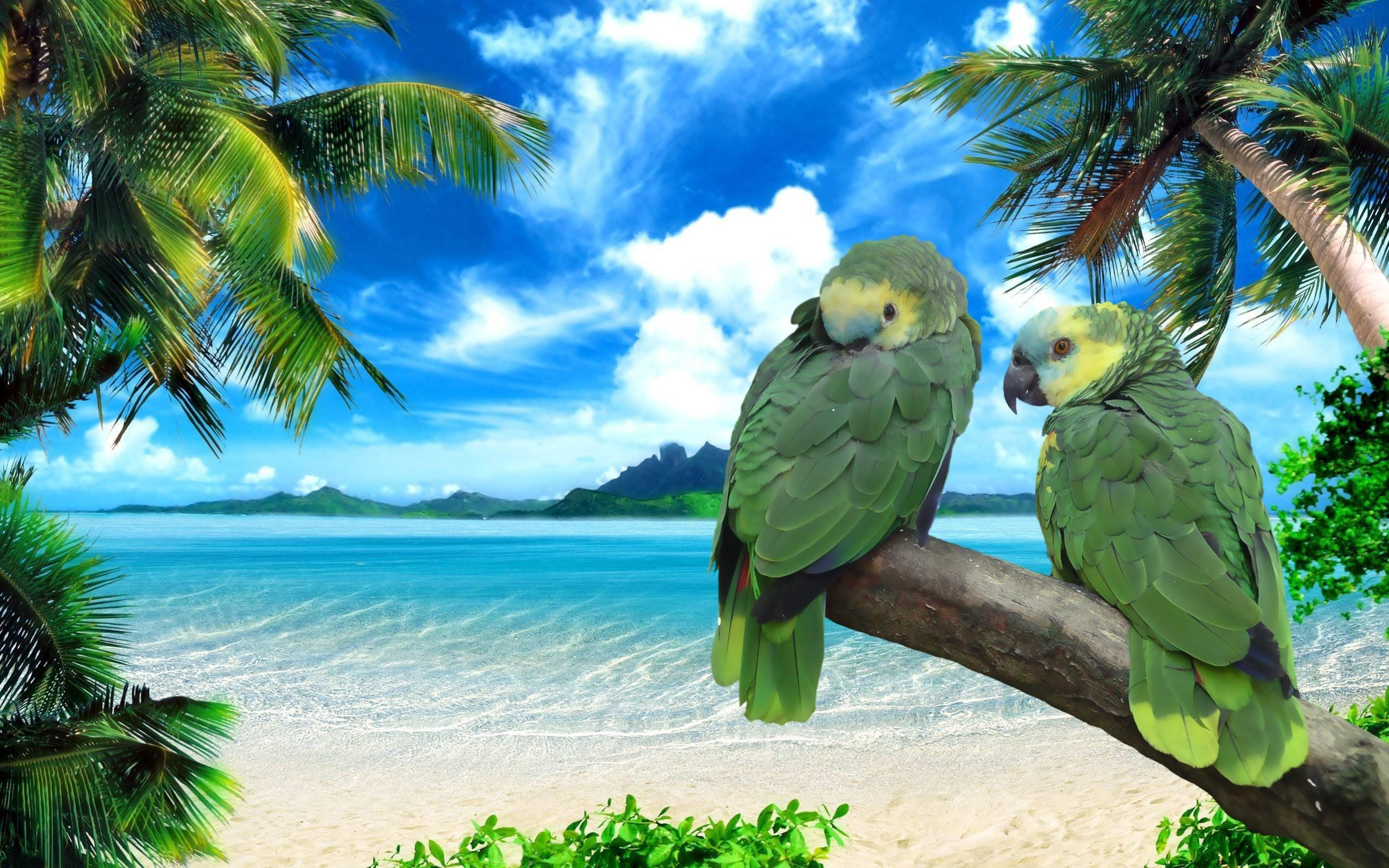 Exotic Beach Wallpaper Widescreen Wallpapers of Exotic 2560x1600