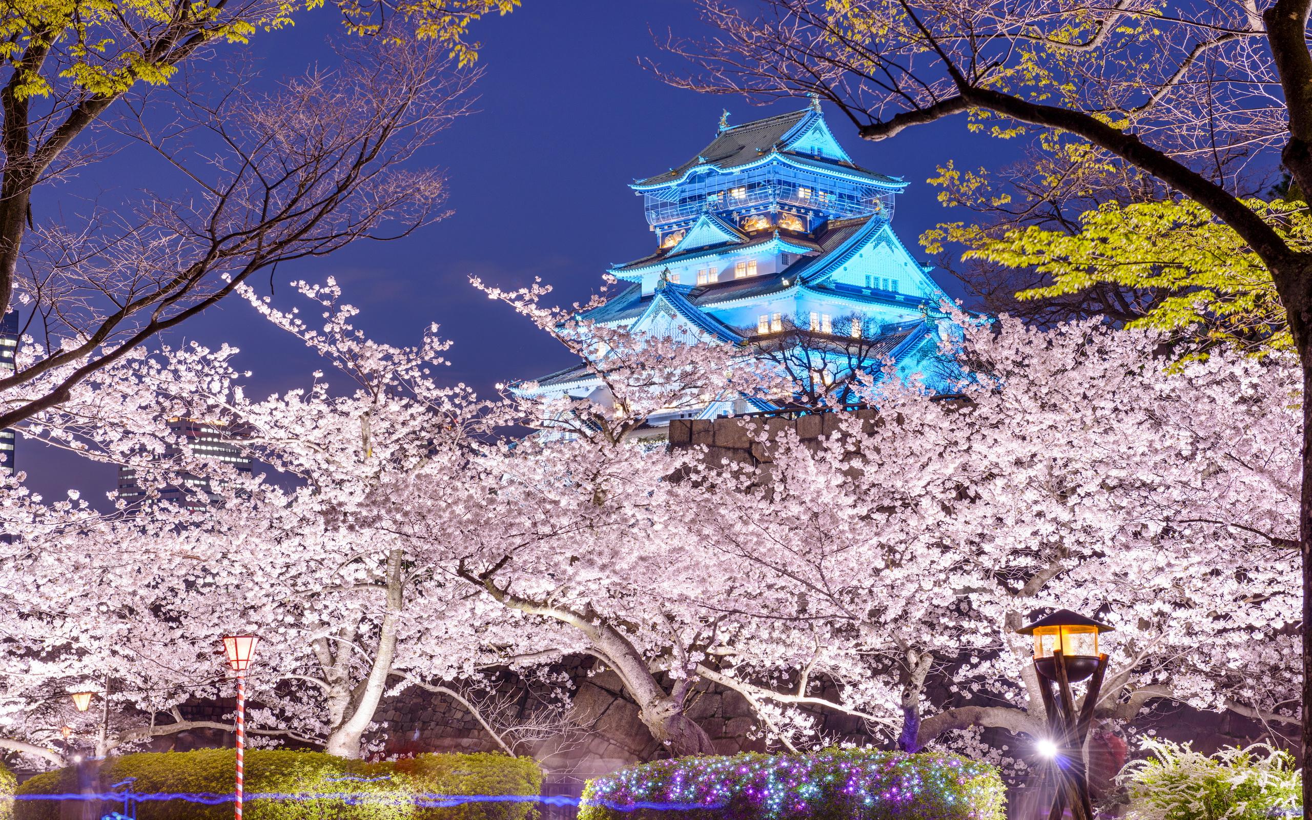 Замок Осака Япония сакура  № 3700706  скачать