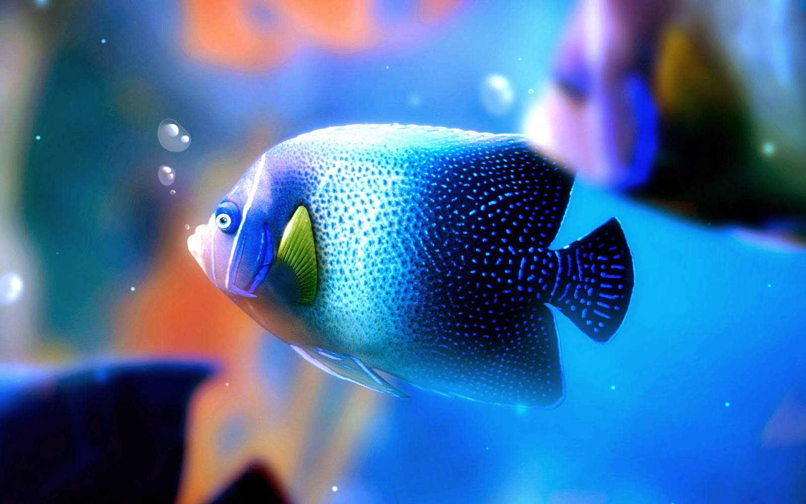 Most Beautiful Blue fish HD wallpapers 1600x1000