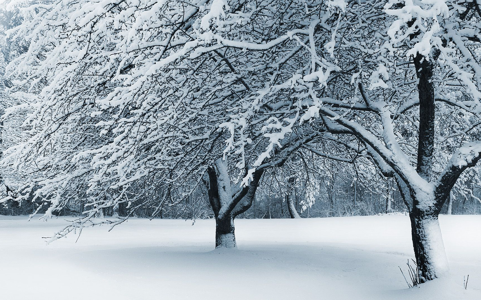 Snowy forest scene photography wallpaper Desktop Background Scenery 1680x1050