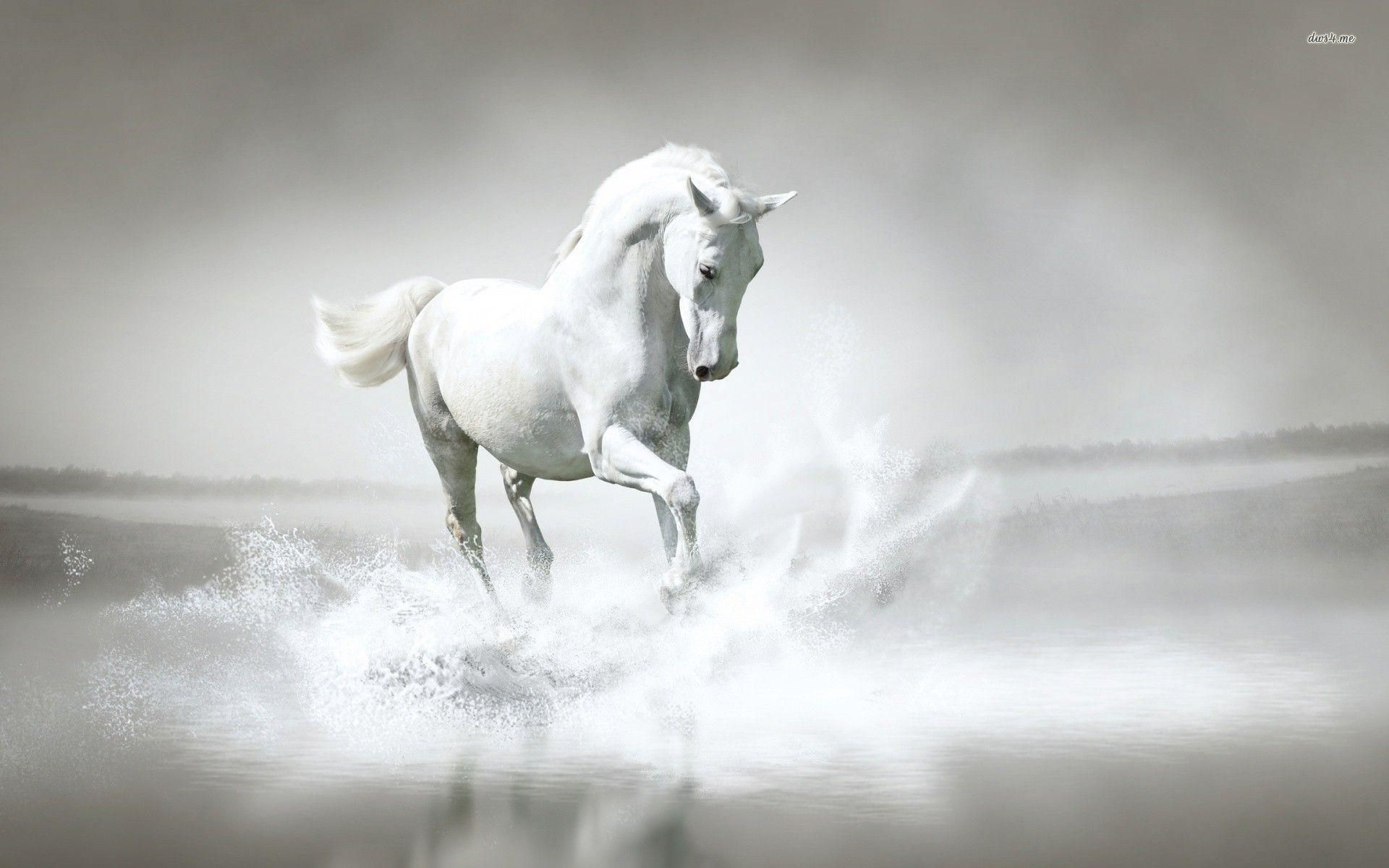 Horse Full HD Wallpaper and Background 2560x1440 ID432346 Horse 1920x1200