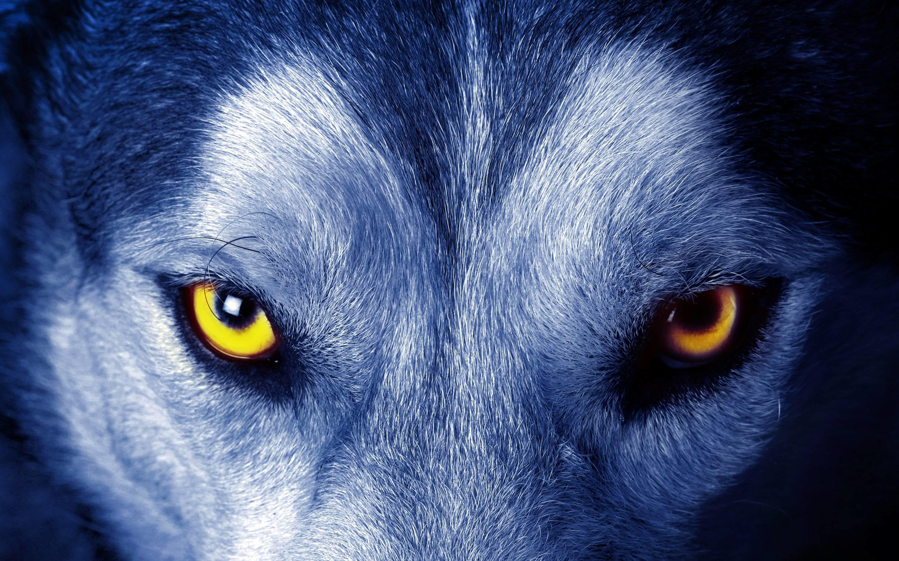 Download Live Wolf Wallpaper 58   Wallpaper For your 2880x1800