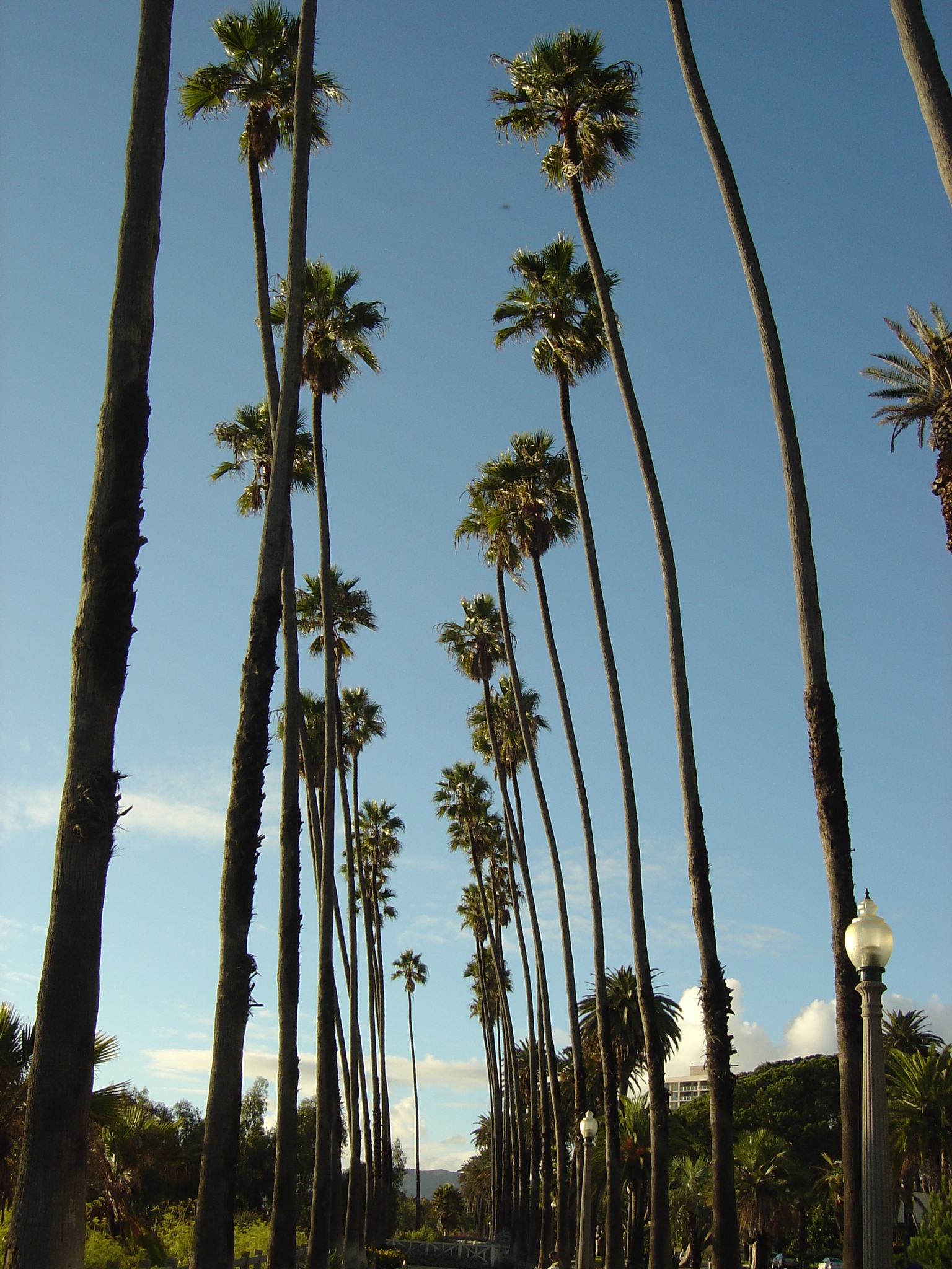 Alfa img   Showing California Palm Trees Background 1536x2048