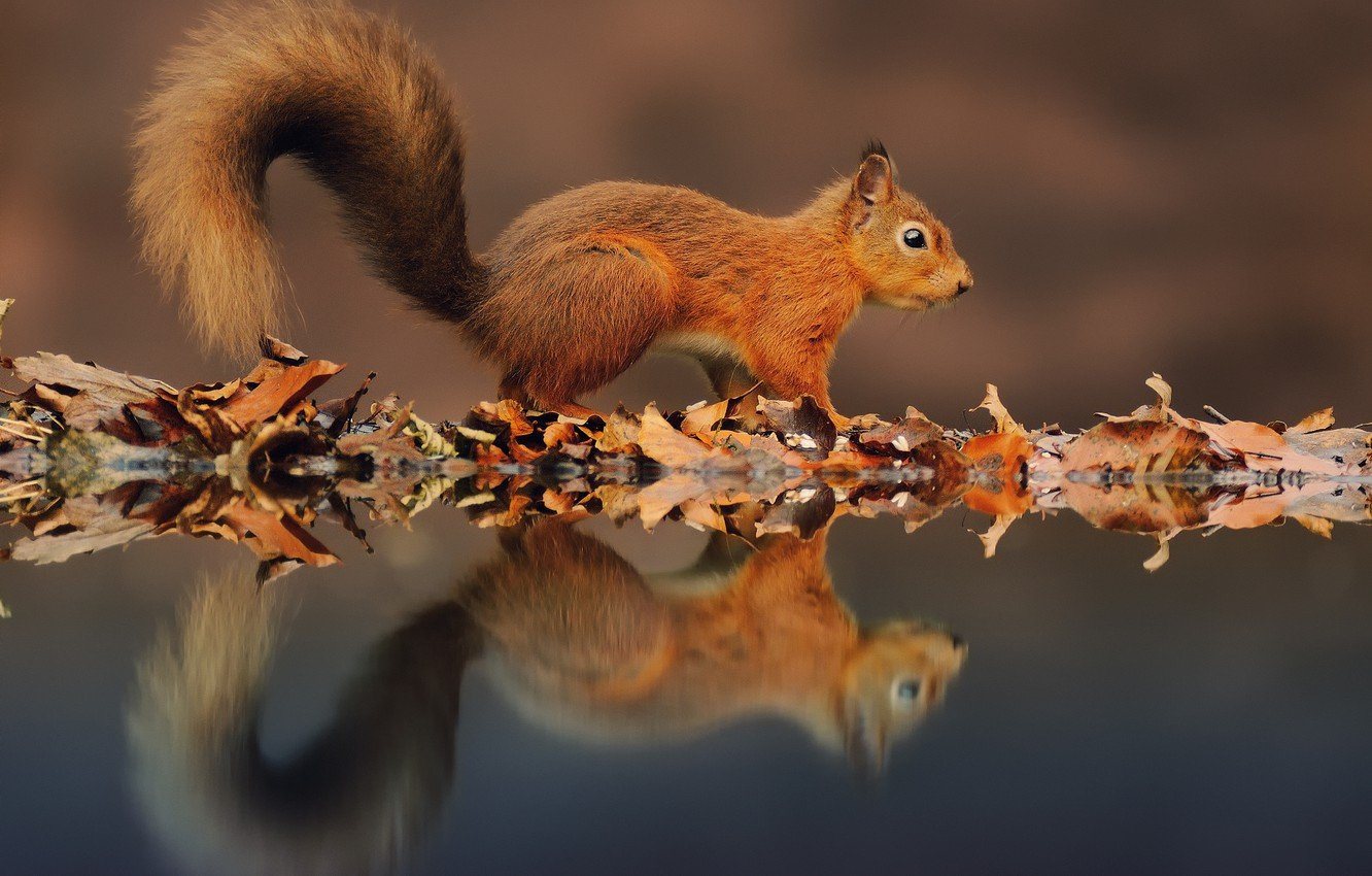 Wallpaper water reflection foliage protein autumn images for 1332x850