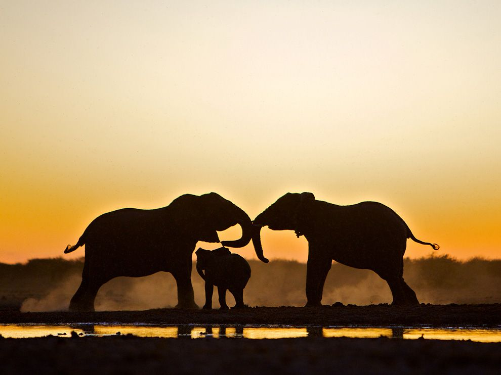 Picture of two adult elephants and a baby elephant in Namibia 990x742