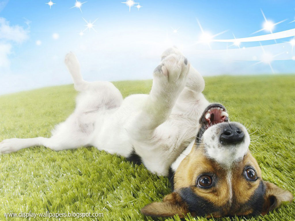Cute Animals Wallpaper Download Download WallpaperDesktop Wallpaper 1024x768