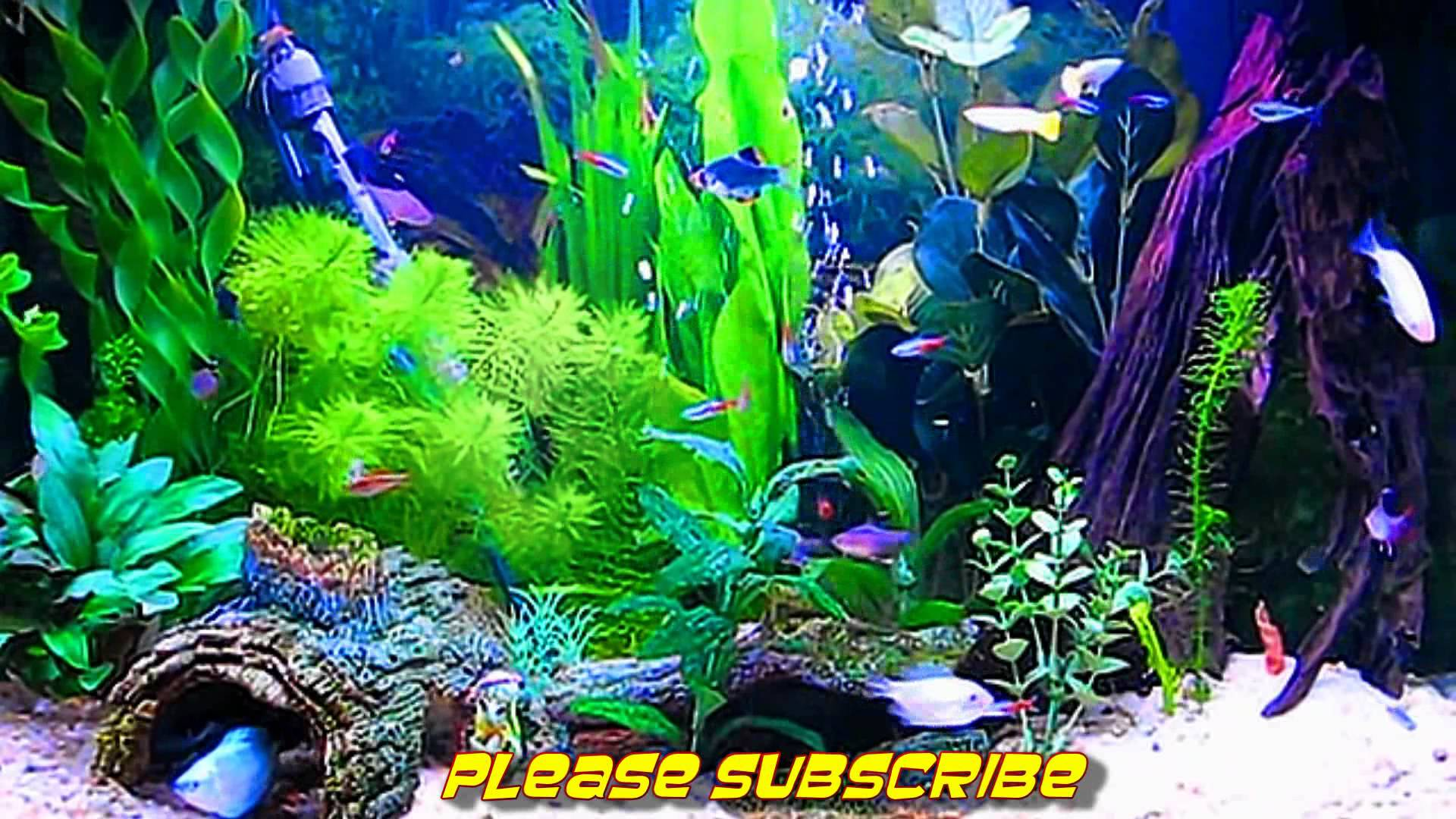 Amazing HD Aquarium ScreenSaver Windows and Android 1920x1080
