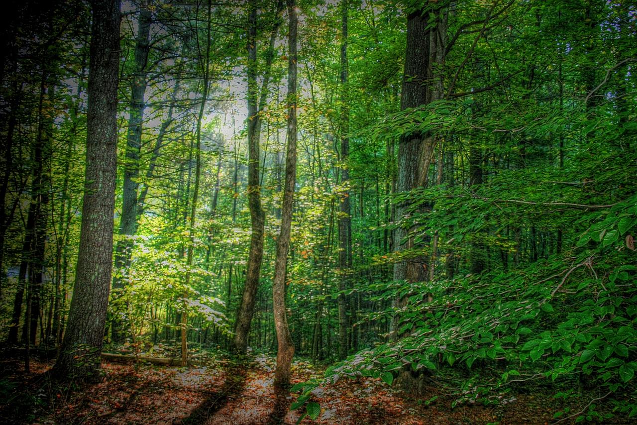 Forest Wallpaper 1280x854