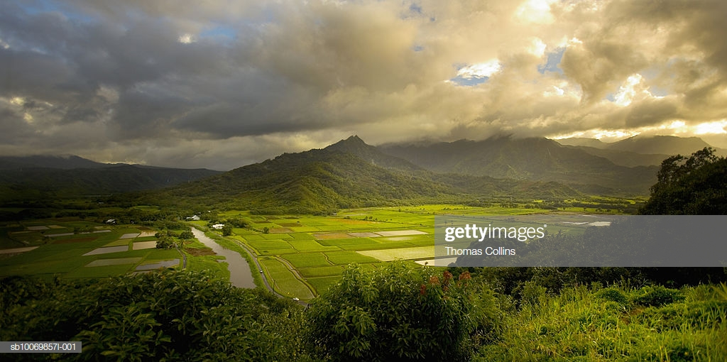 Usa Hawaii Kauai Hanalei Valley Rice Fields With Hawaiian 1024x510
