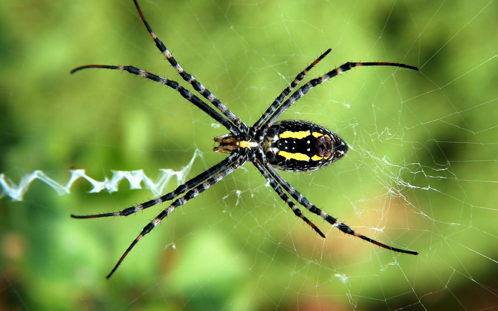 hd spider wallpaper with a spider in the web hd spiders wallpapers 1600x1000
