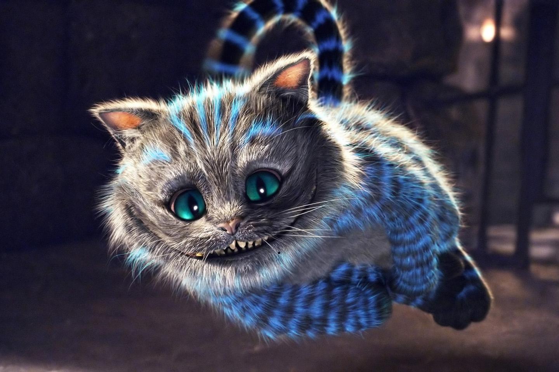 Hd wallpaper cat - Cats Cheshire Cat Hd N Backgrounds Wallpaper Full Hd Wallpapers