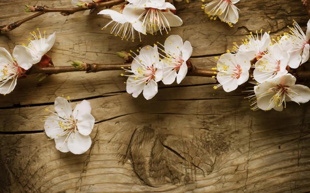 spring flowers wallpaper widescreen   Wallpapers 1024x640