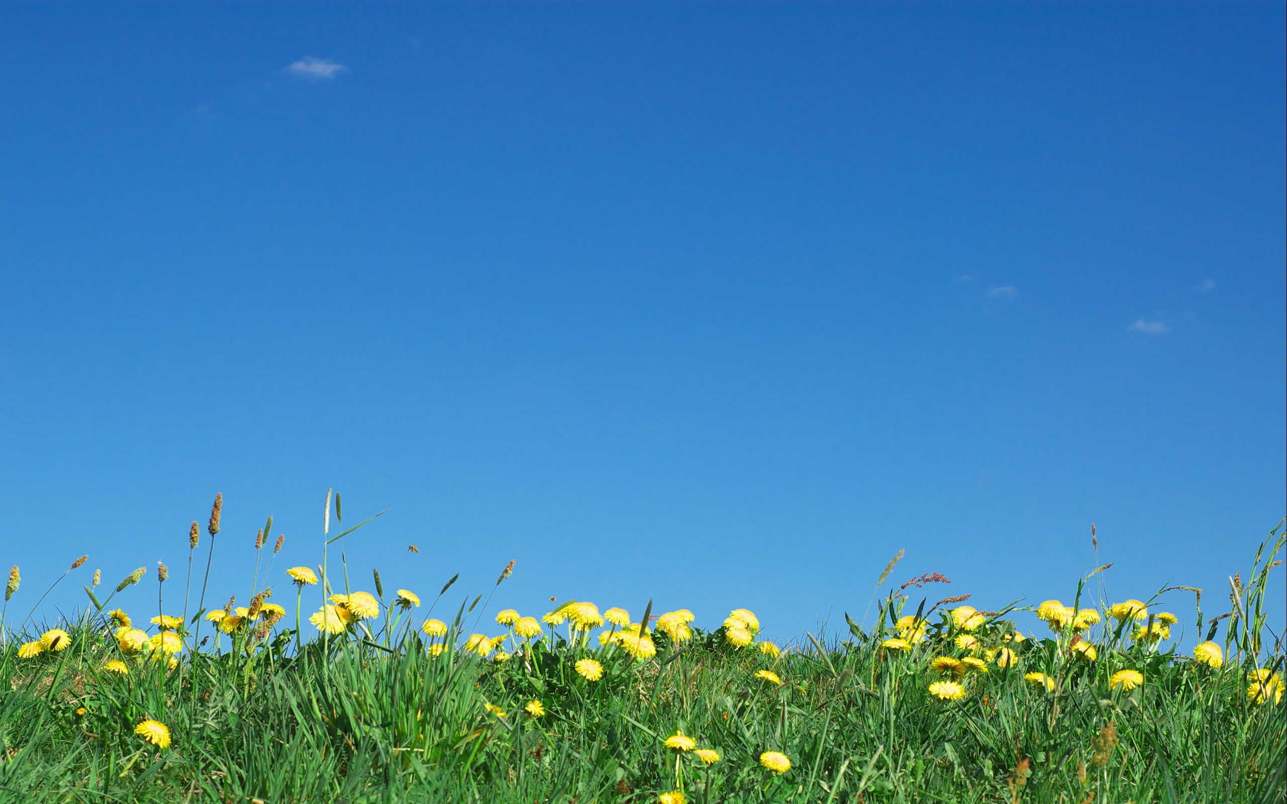 2560x1600 Flowers and sky desktop PC and Mac wallpaper 2560x1600