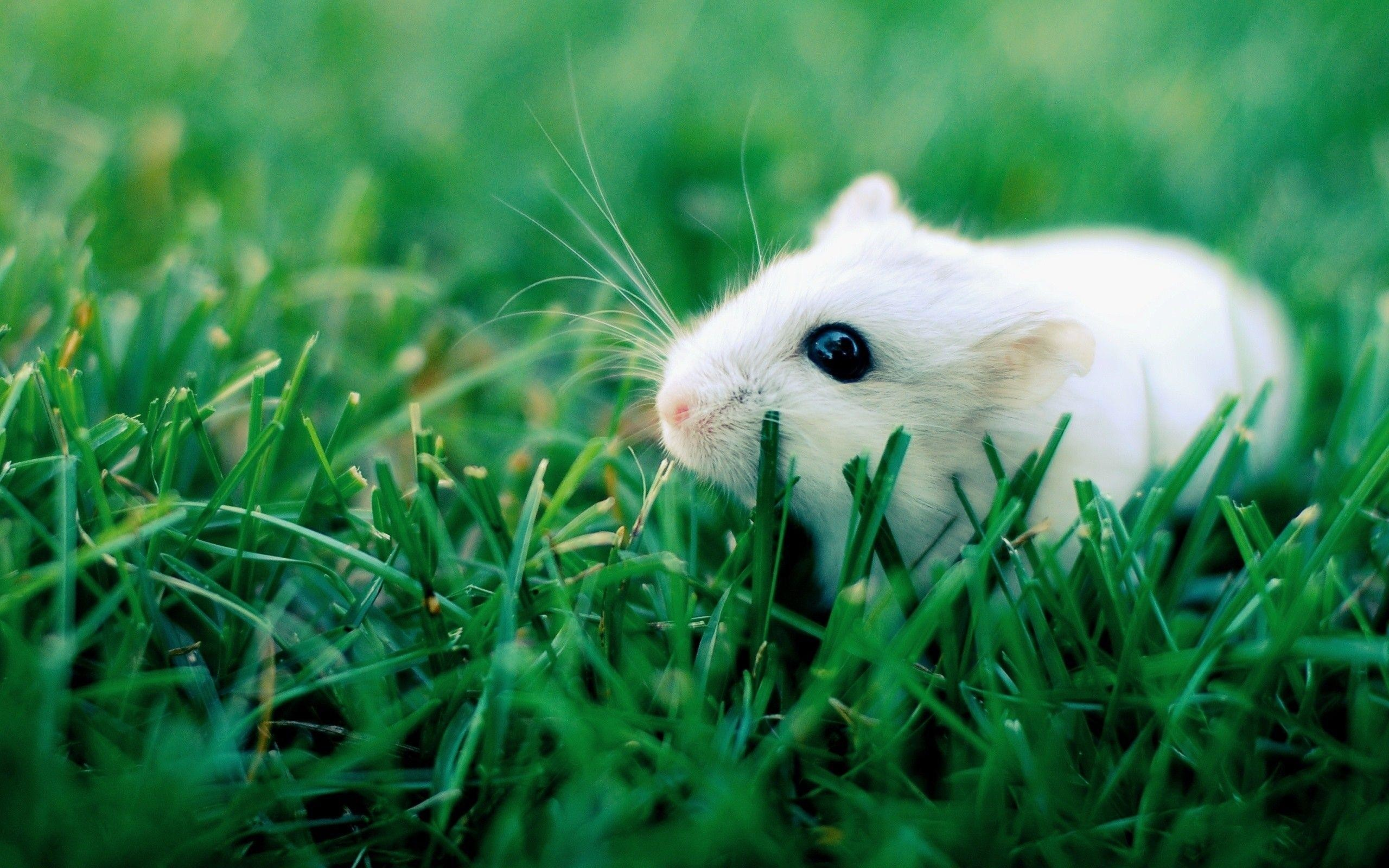 Hamster Background Images HD Wallpapers 2560x1600
