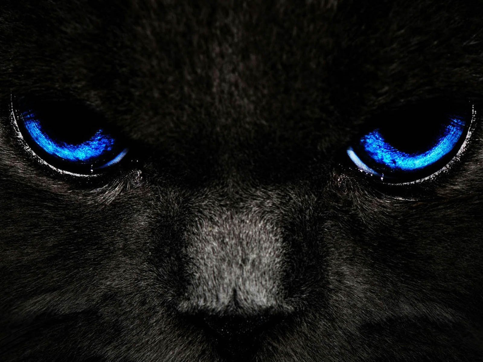 Black Cat Blue Eyes Wallpapers 1600x1200