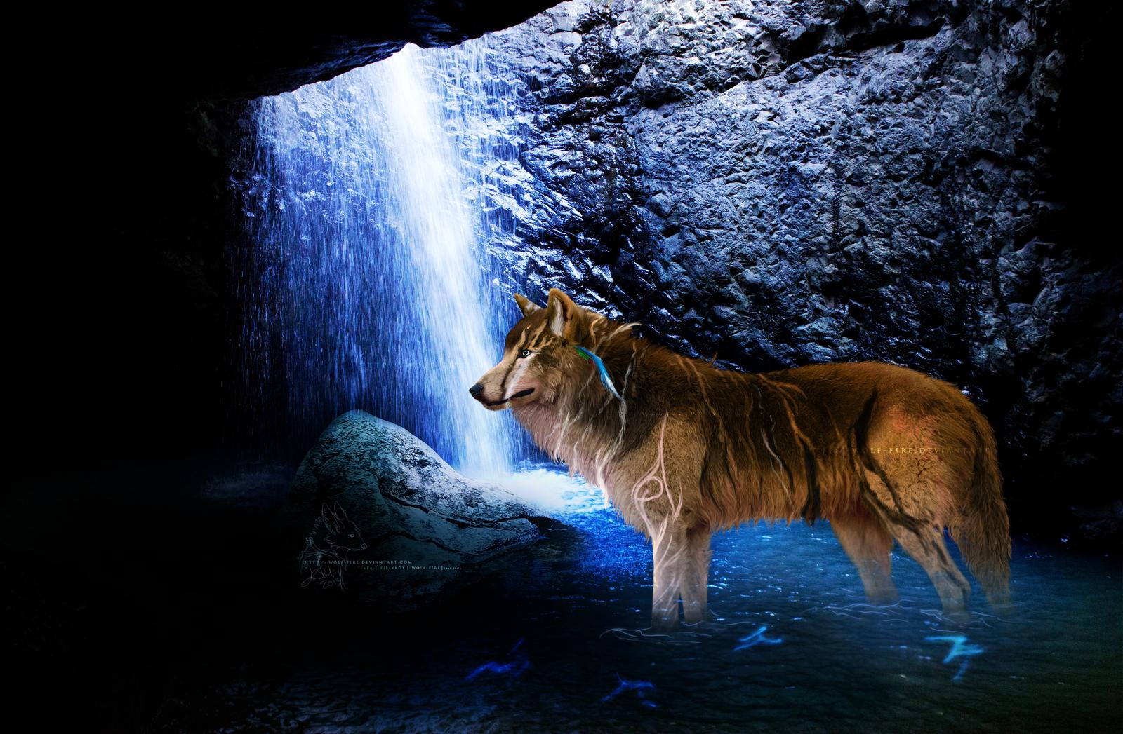 wolf fire digital art photomanipulation animals plants 2013 2014 wolf 1600x1047