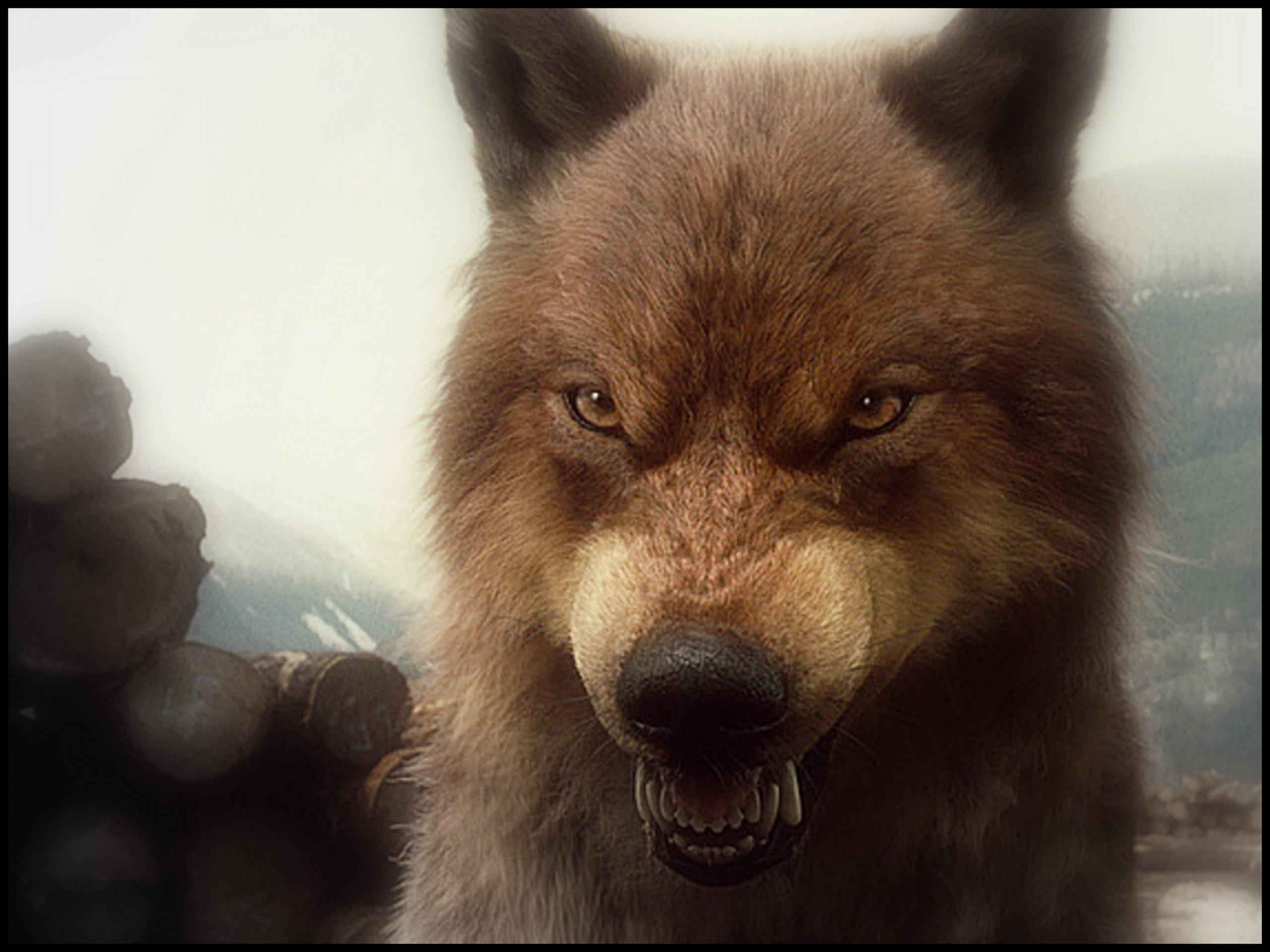 bd wolves 2   Twilight Series Wallpaper 27628586 2560x1920