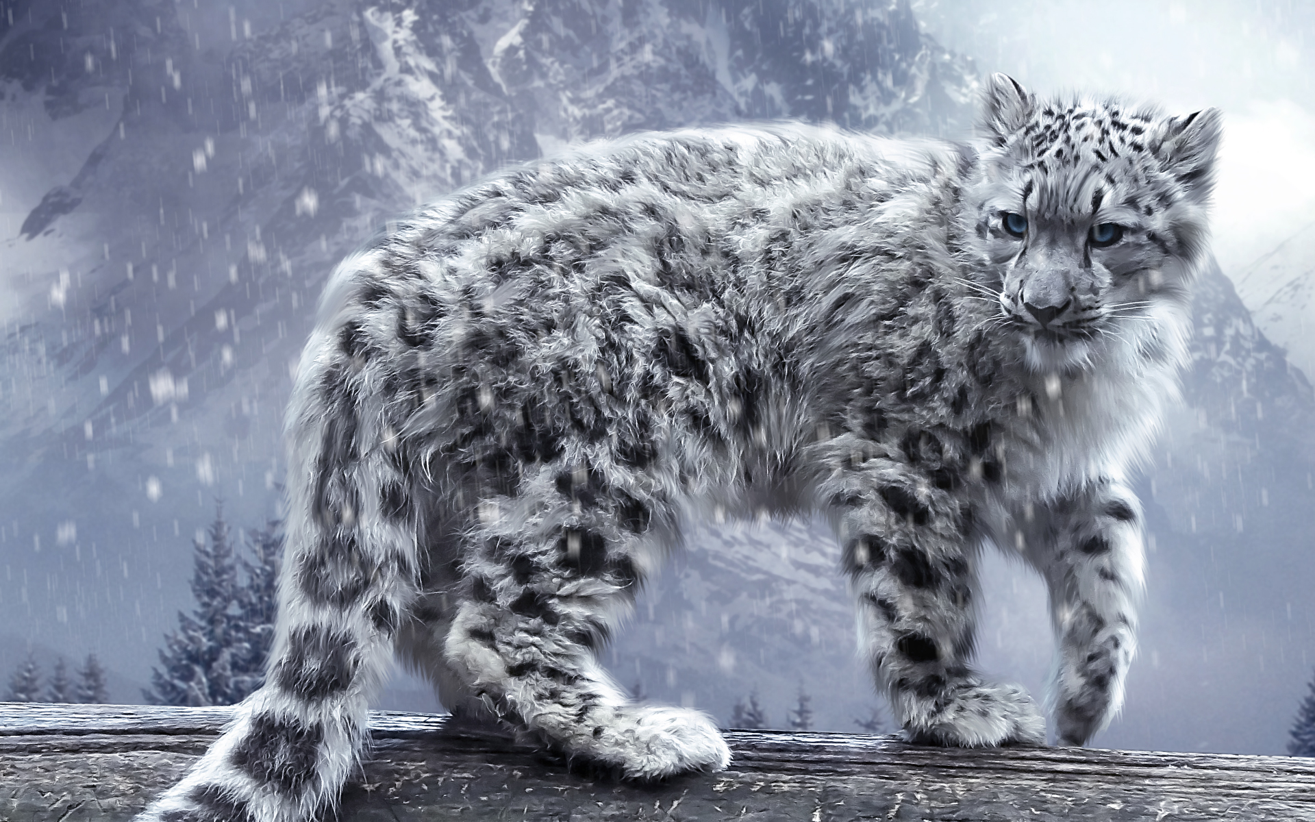 White Leopard Wallpapers HD Wallpapers 1920x1200