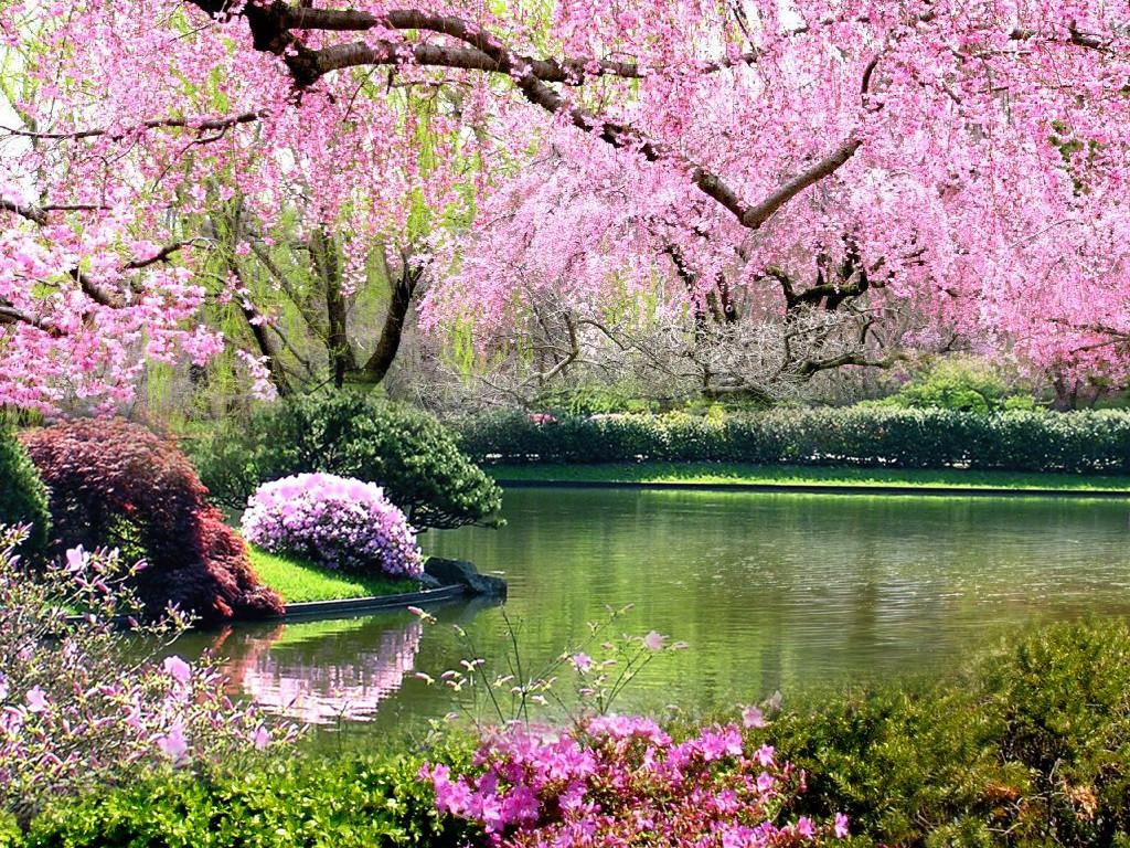 Springtime Background - WallpaperSafari
