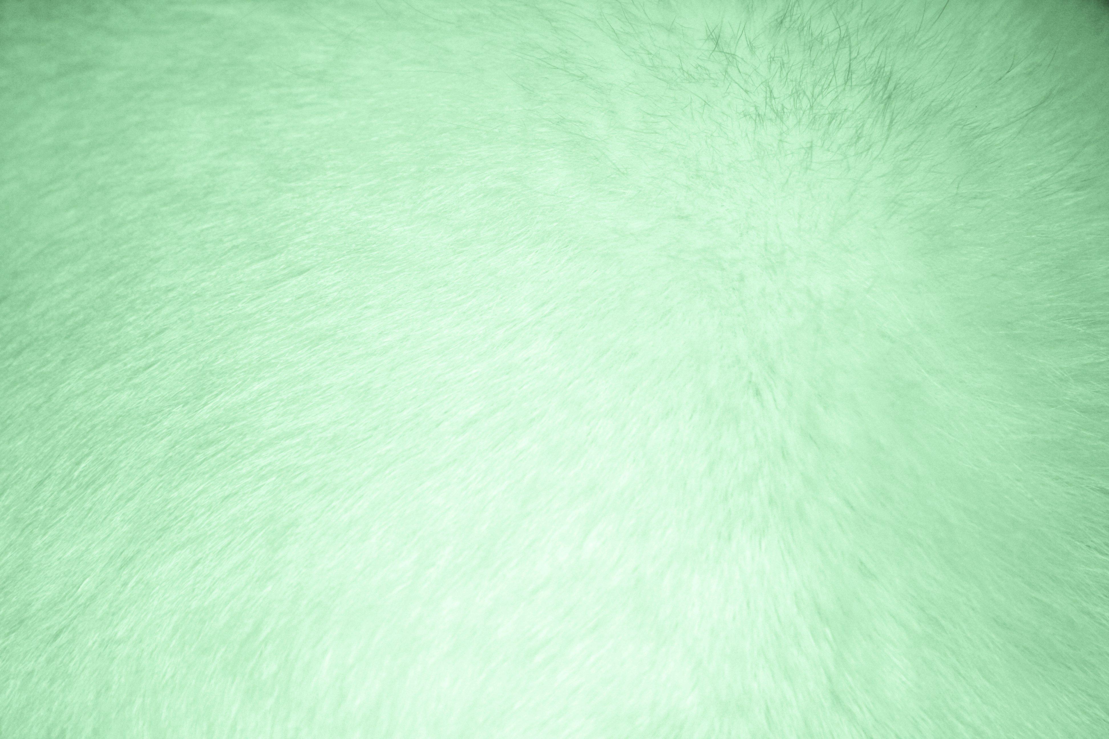 Light Green Fur Texture Picture Photograph Photos Public 3888x2592