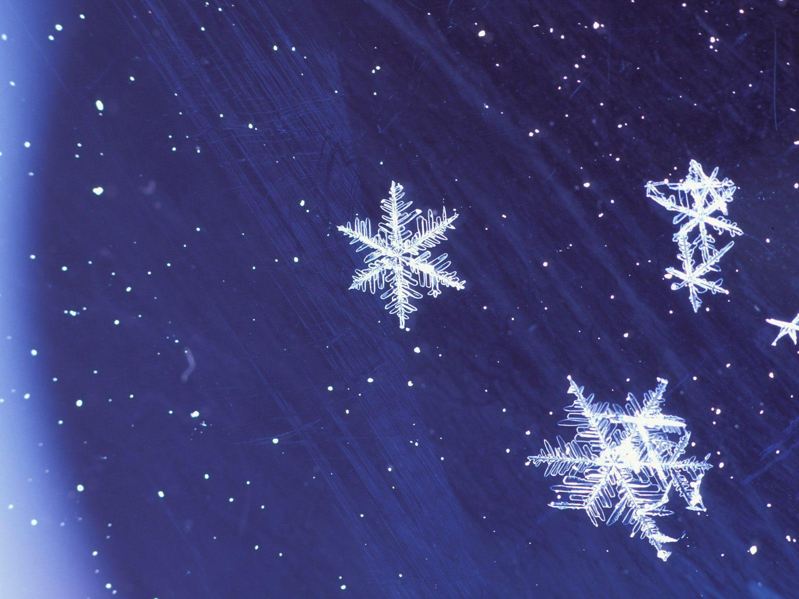 Animated Winter IPhone Wallpaper