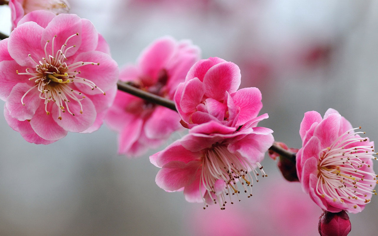 Charming feminine pink Flowers HD Wallpaper 6 Flower Wallpapers 1280x800