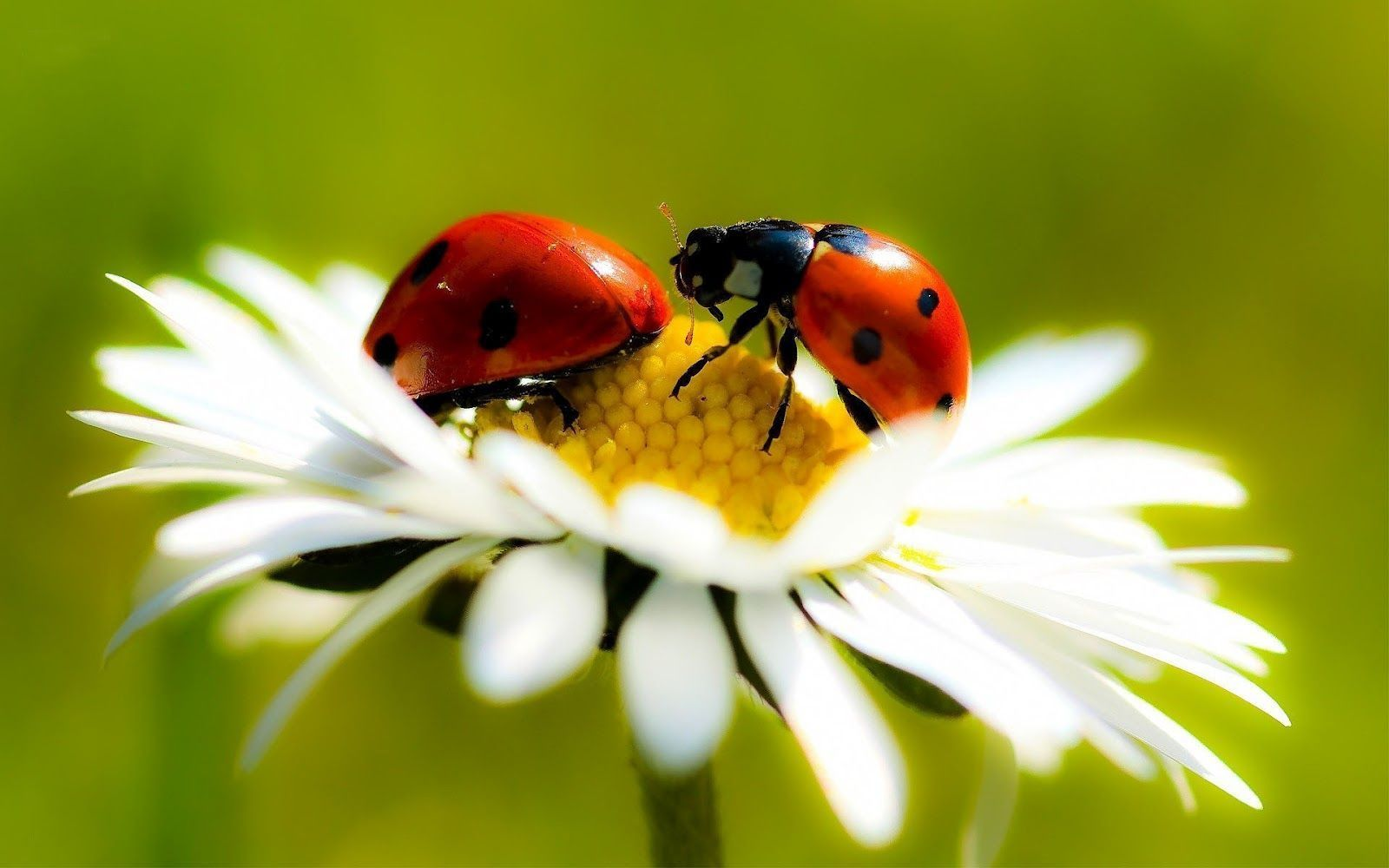 60 Ladybug and Flower Wallpapers   Download at WallpaperBro 1600x1000