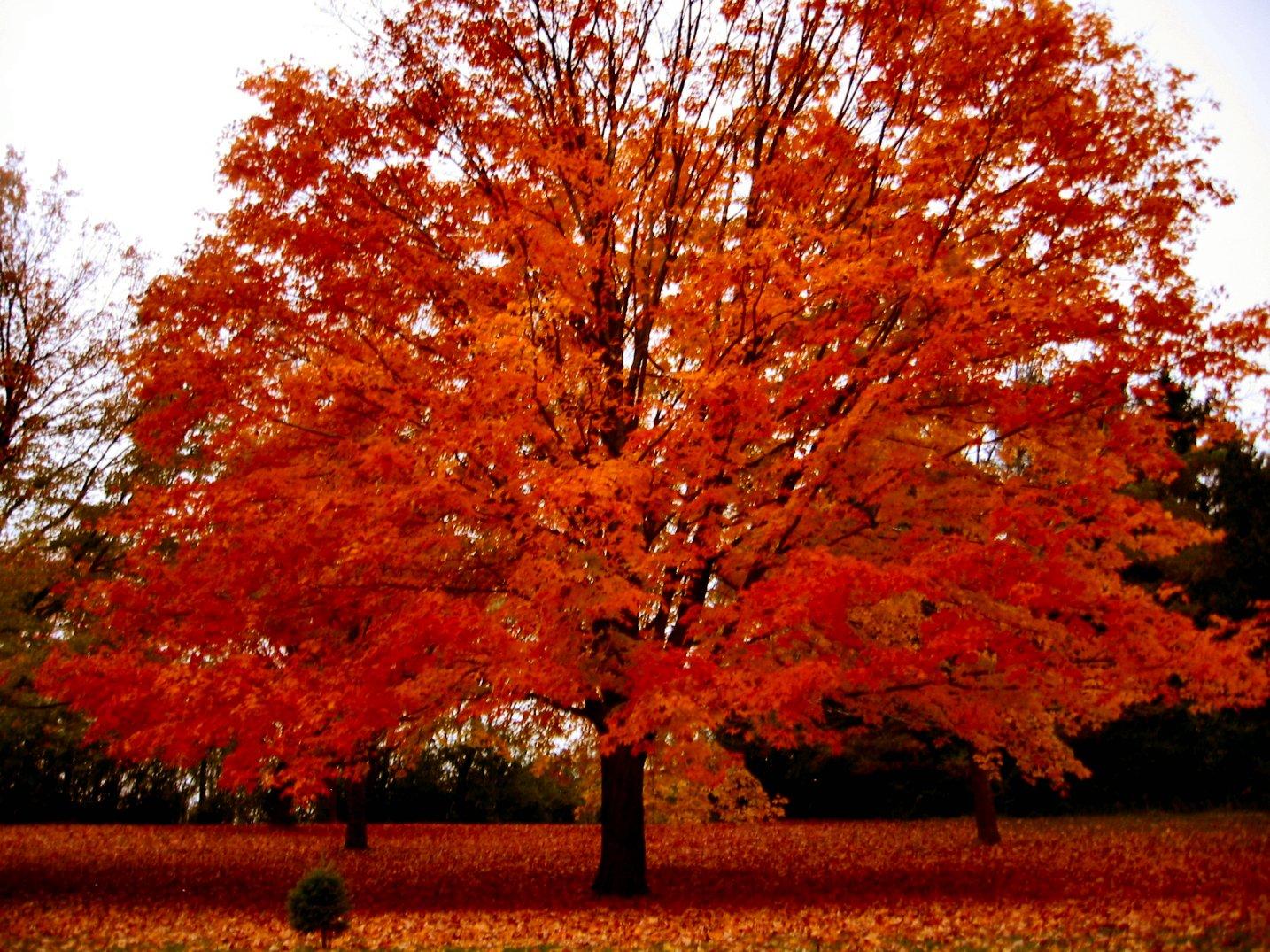 Fall Trees Photography Wiconsin autumn photo 1434x1075