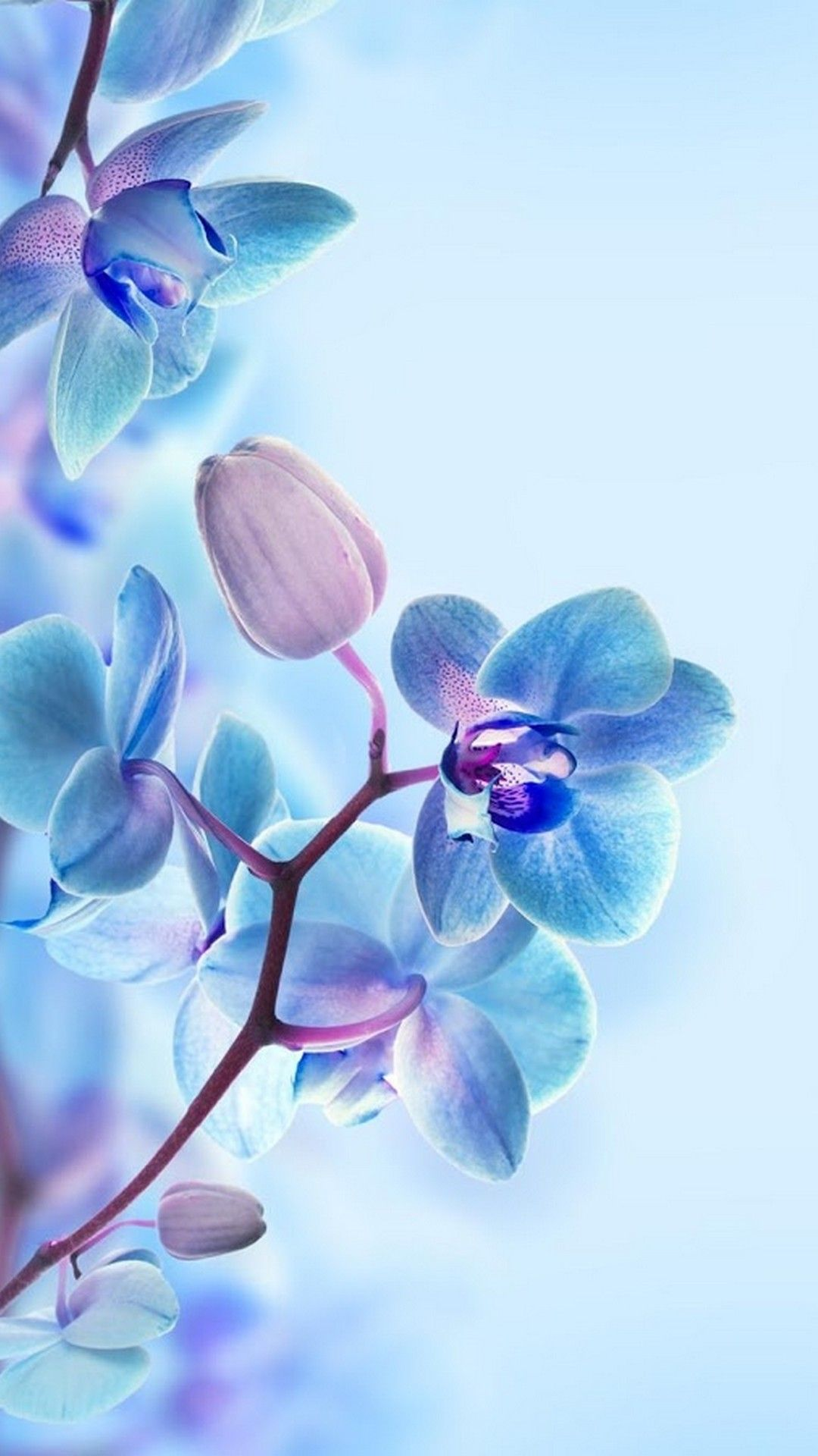 3D Flower HD Wallpapers For Mobile Best HD Wallpapers Blue 1080x1920