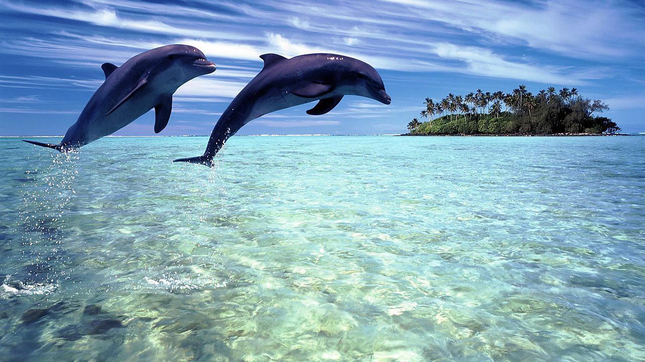 Dolphins Live Wallpaper   Android Uygulamalar ve Testleri 1280x720