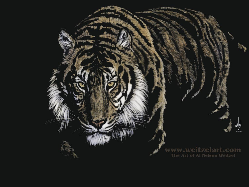 Desktop Wallpapers Backgrounds Tiger Wallpaper   Animals Wallpapers 1024x768