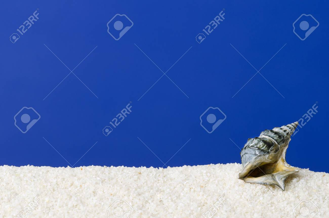 Sea Snail Shell On White Sand With Ultramarine Background Small 1300x861