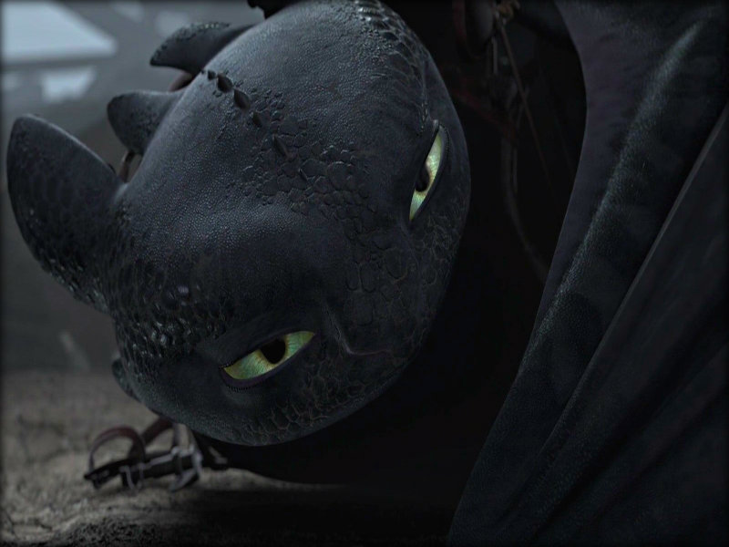 Toothless   Toothless the Dragon Wallpaper 33005434 800x600