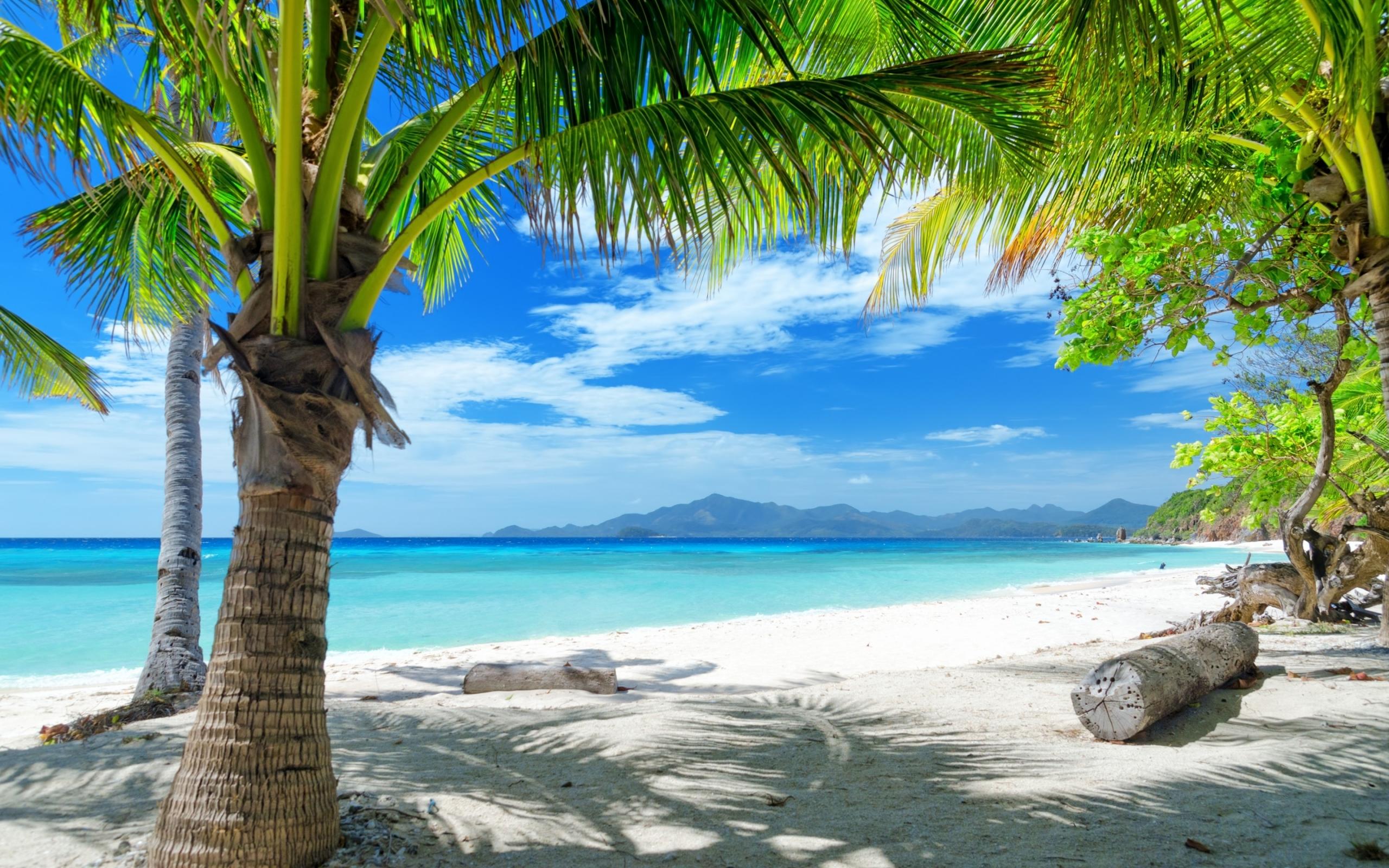 Tempting ocean beach with palm trees HD Desktop Wallpaper HD Desktop 2560x1600