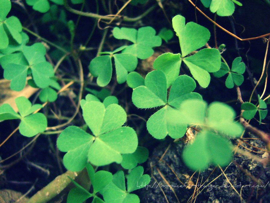 Lucky Charm Wallpaper My lucky charm by 900x675