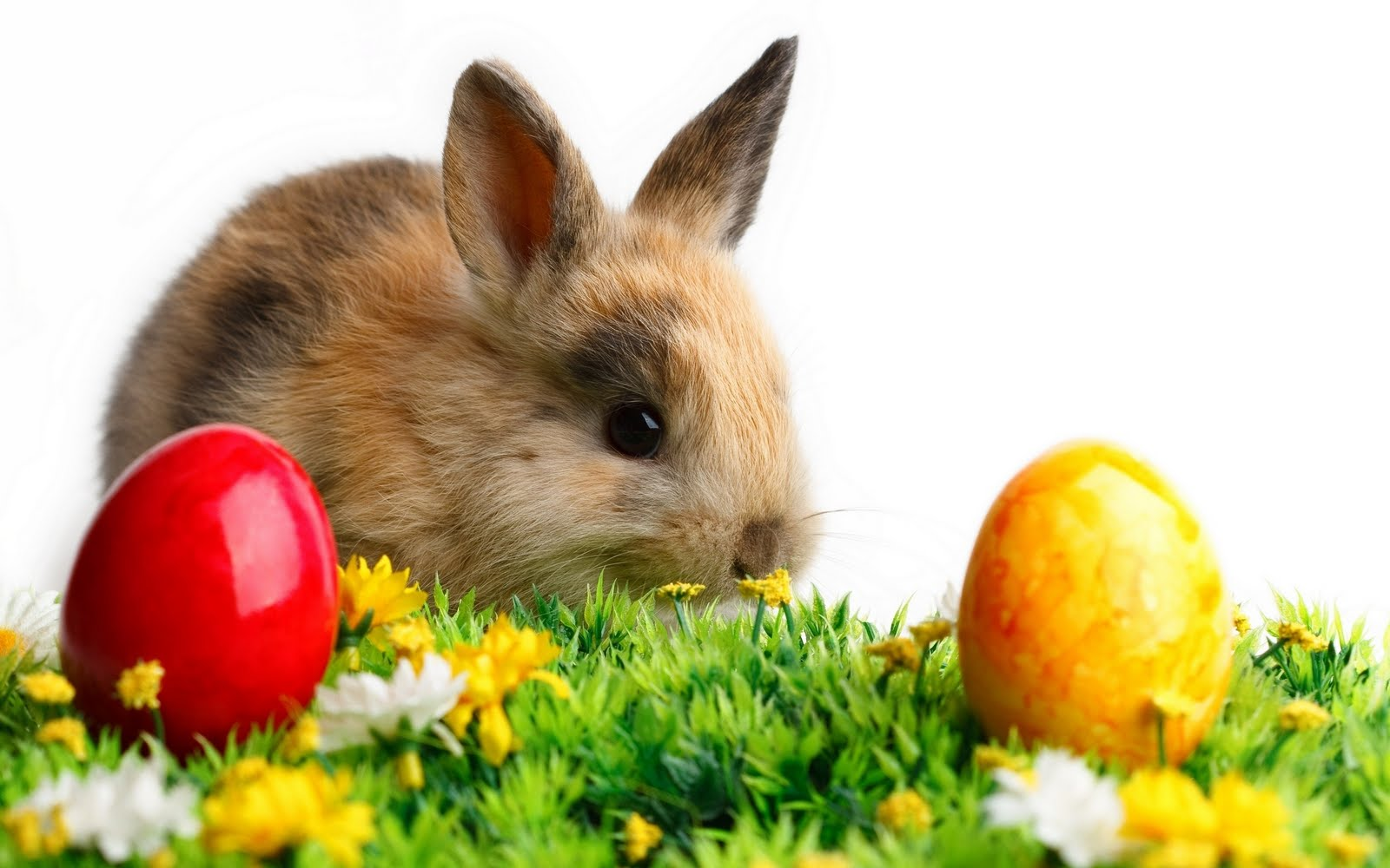 Description Happy Easter Bunny Wallpaper is a hi res Wallpaper for pc 1600x1000