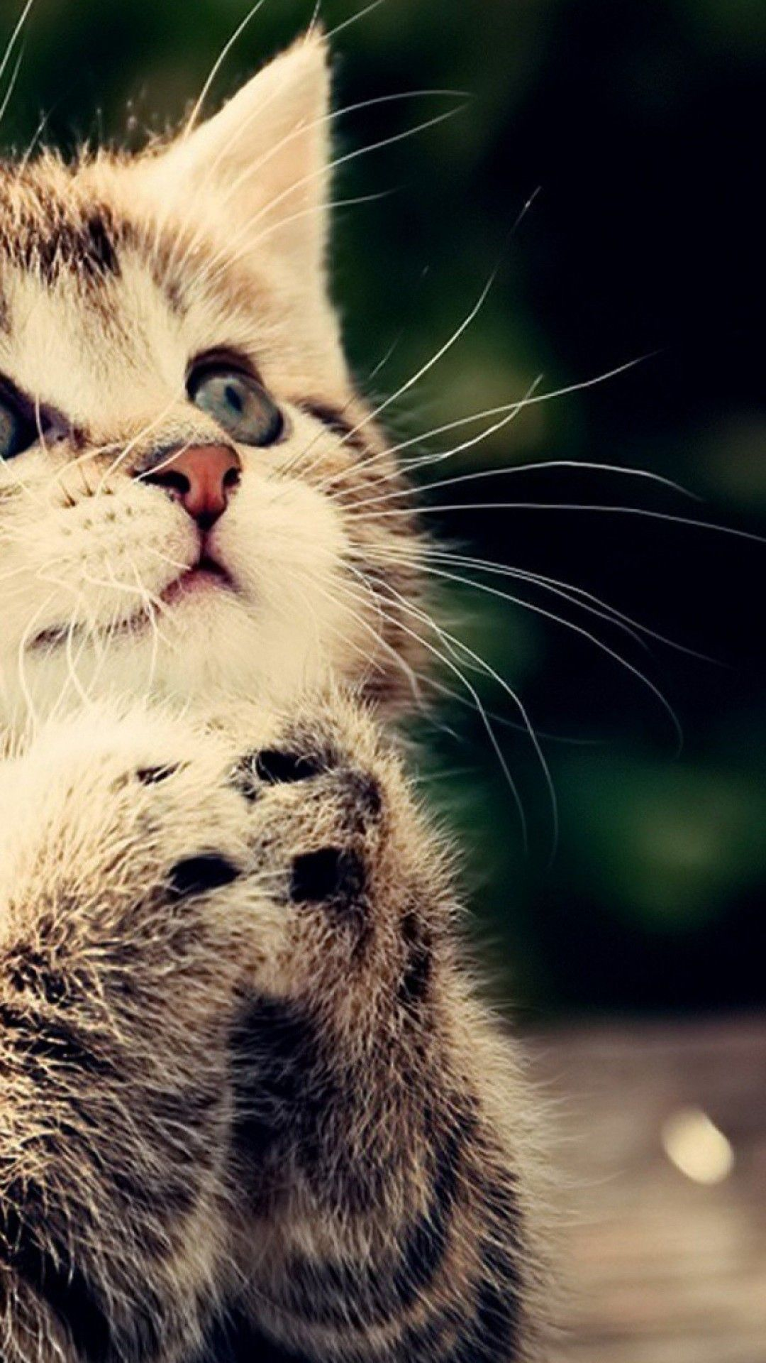 [40] Cute Cat HD Wallpapers Desktop Background Android 1080x1920