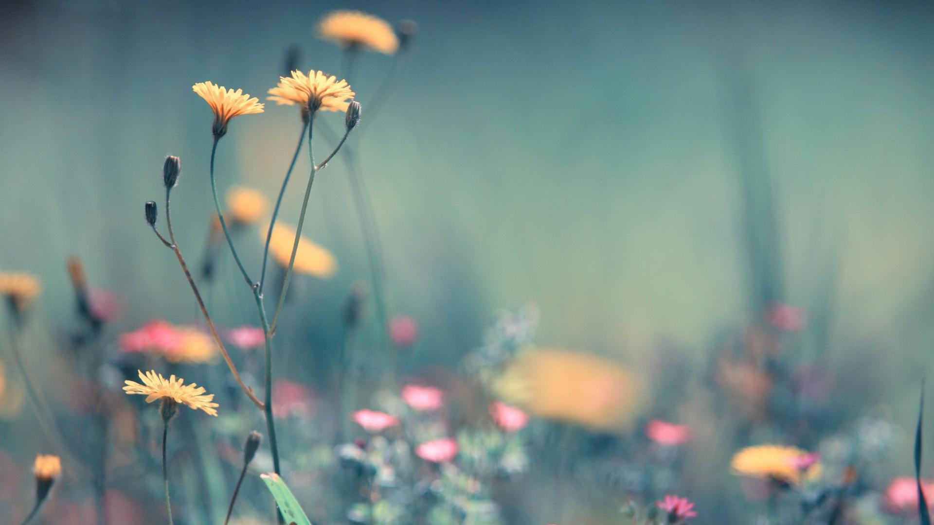 pink full hd wallpaper Flower spiring wallpaper download 1080p 1920x1080