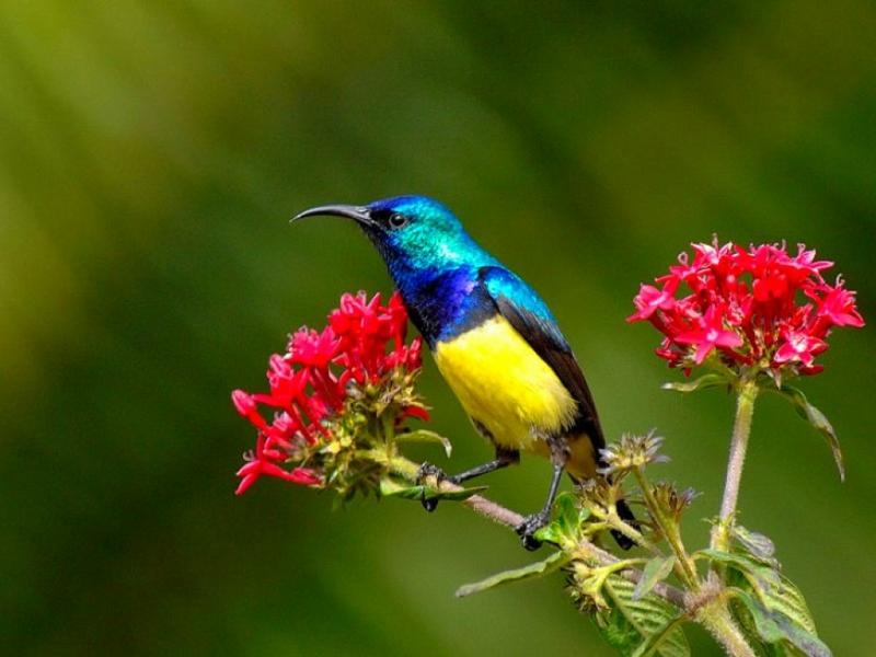 Beautiful Bird Bird w Flowers Animals Birds HD Desktop Wallpaper 800x600
