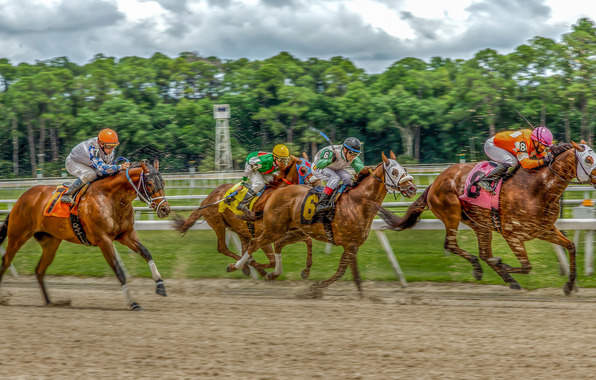 Hdr horse racing horses horses riders race track wallpapers 596x380