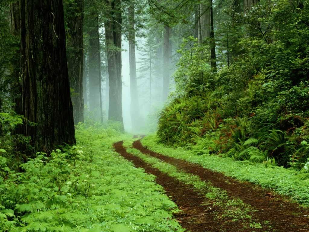 Superb Forest Wallpaper download in digitalimagemakerworldcom 1024x768