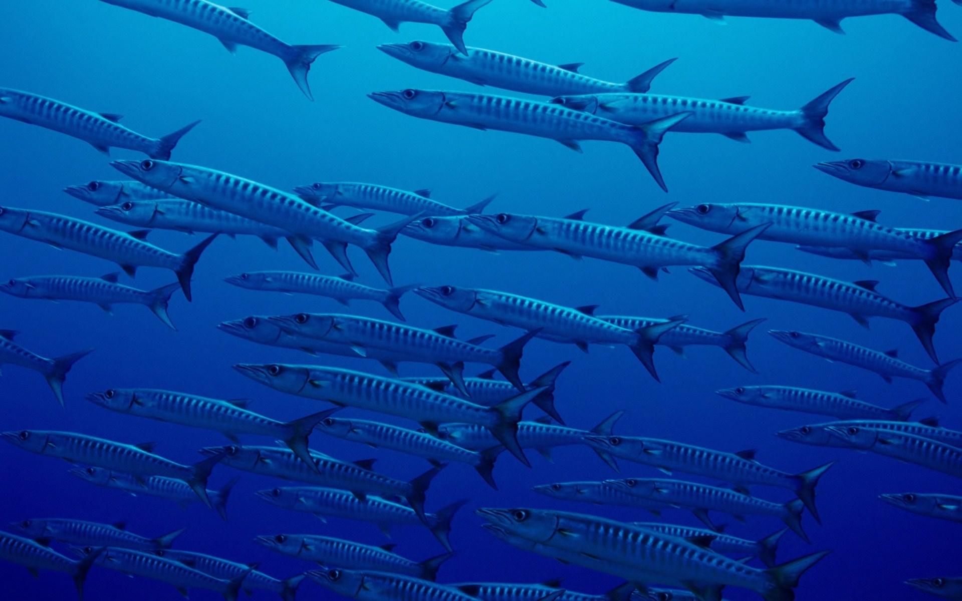 Nature ocean fish blue sea hd wallpaper wallpaper 1920x1200 196182 1920x1200
