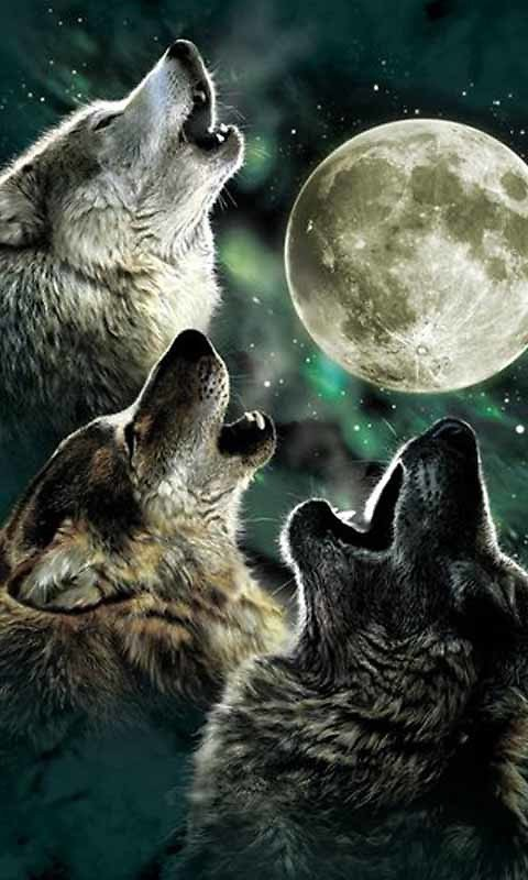 Glowing Wolf Live Wallpaper Android Live Wallpaper download 480x800