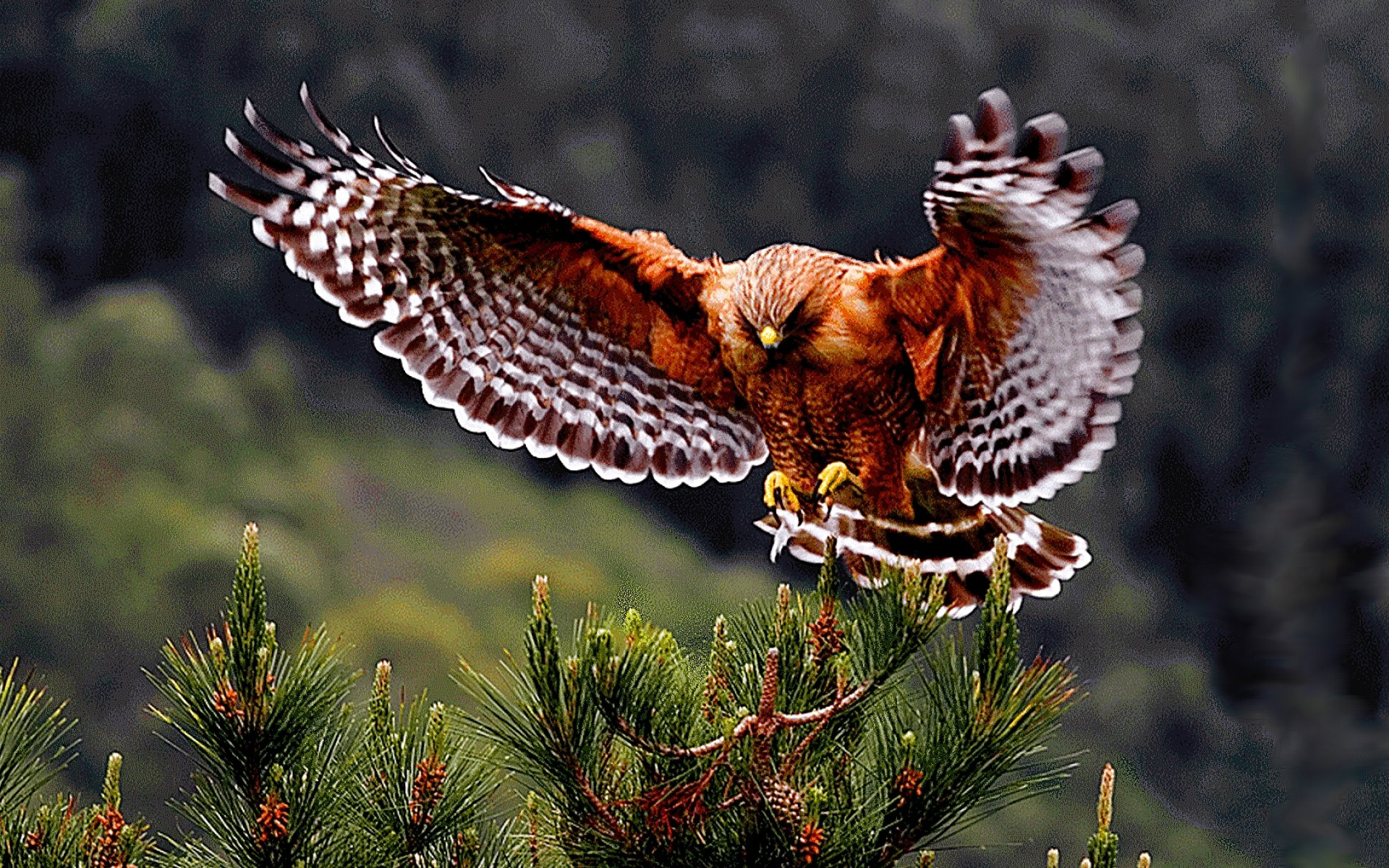 animals in flight wallpaper desk - photo #20