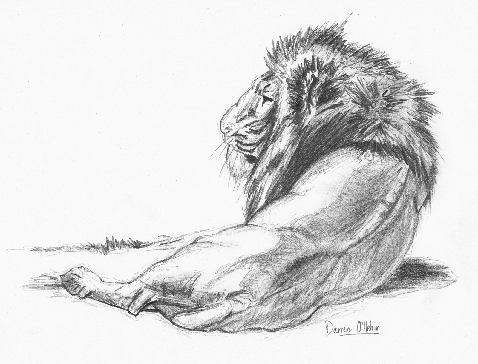 Lion pencil drawing by darrenohhh traditional art drawings animals 1600x1220