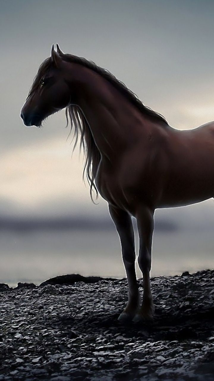 Best Knight on horseback stand on cliff Wallpapers 8 Images 720x1280