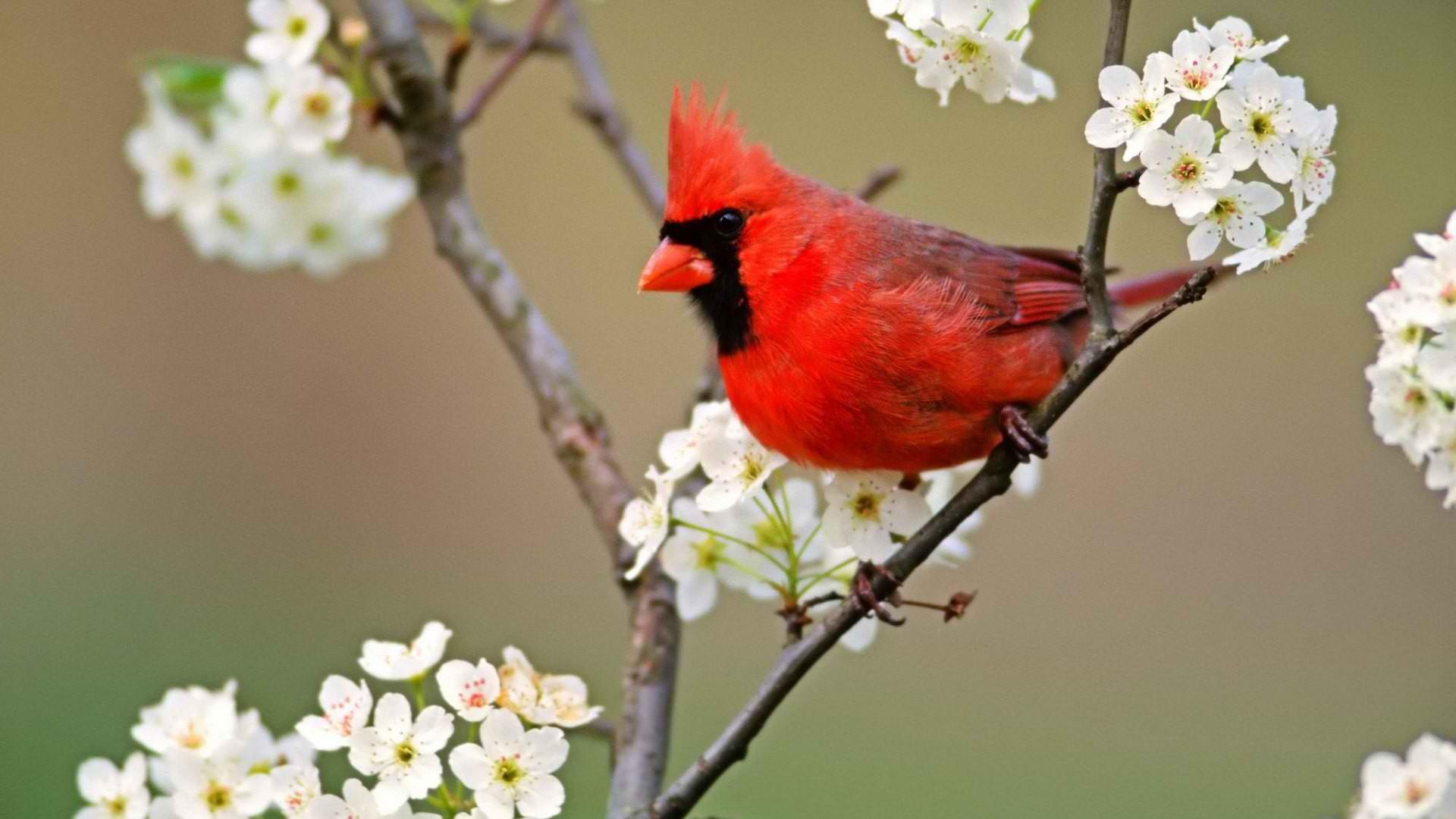43   birds and blooms winter wallpaper on wallpapersafari