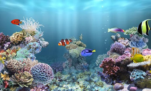 Review of aniPet Marine Aquarium HD apk Download Momoxoo 517x310